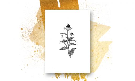 Prestekrager, ryllik og andre ville blomster - 4 print - valgfri størrelse