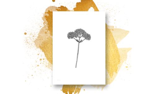 Rødkløver og andre ville blomster - 4 print - valgfri størrelse