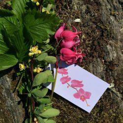 Gavelapper - blomster